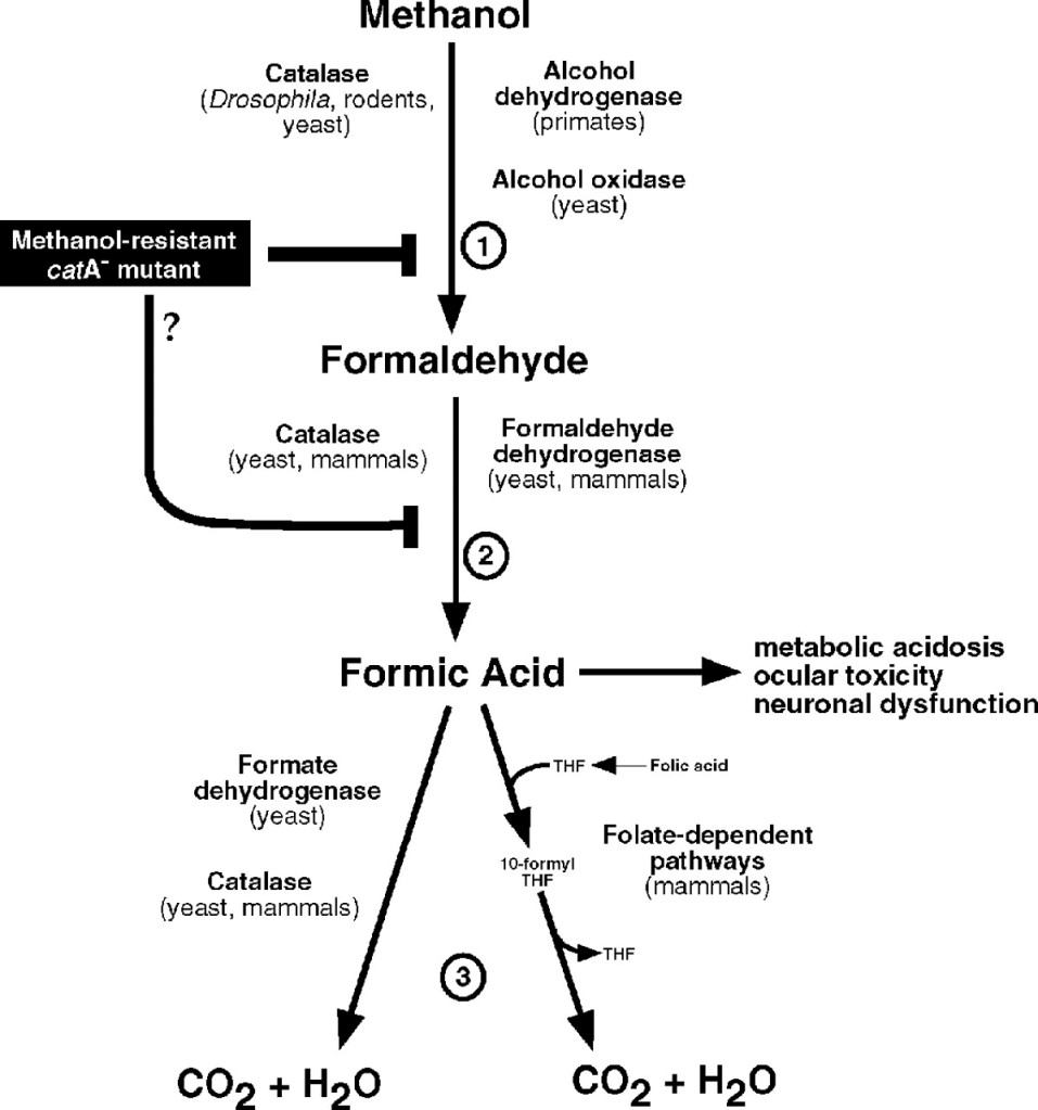 Formaldehyde pathology
