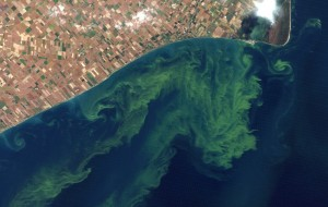 harmful-algal-blooms-in-lake-erie-6d2765278a4c8778